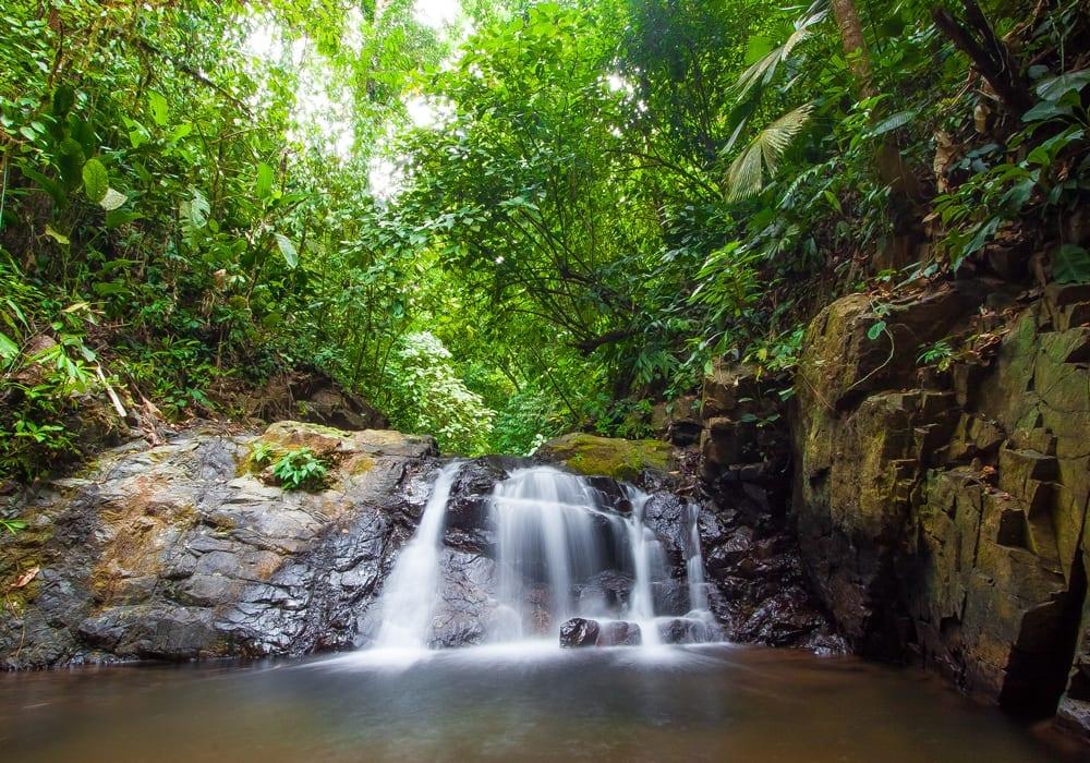 Osa Peninsula Jungle in Costa Rica