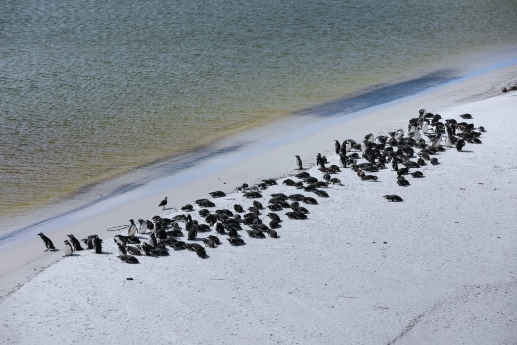 Penguins huddled together an relaxing on the water's edge