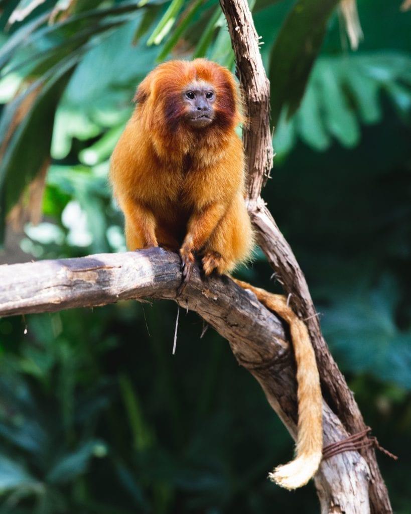 Primate of Rwanda