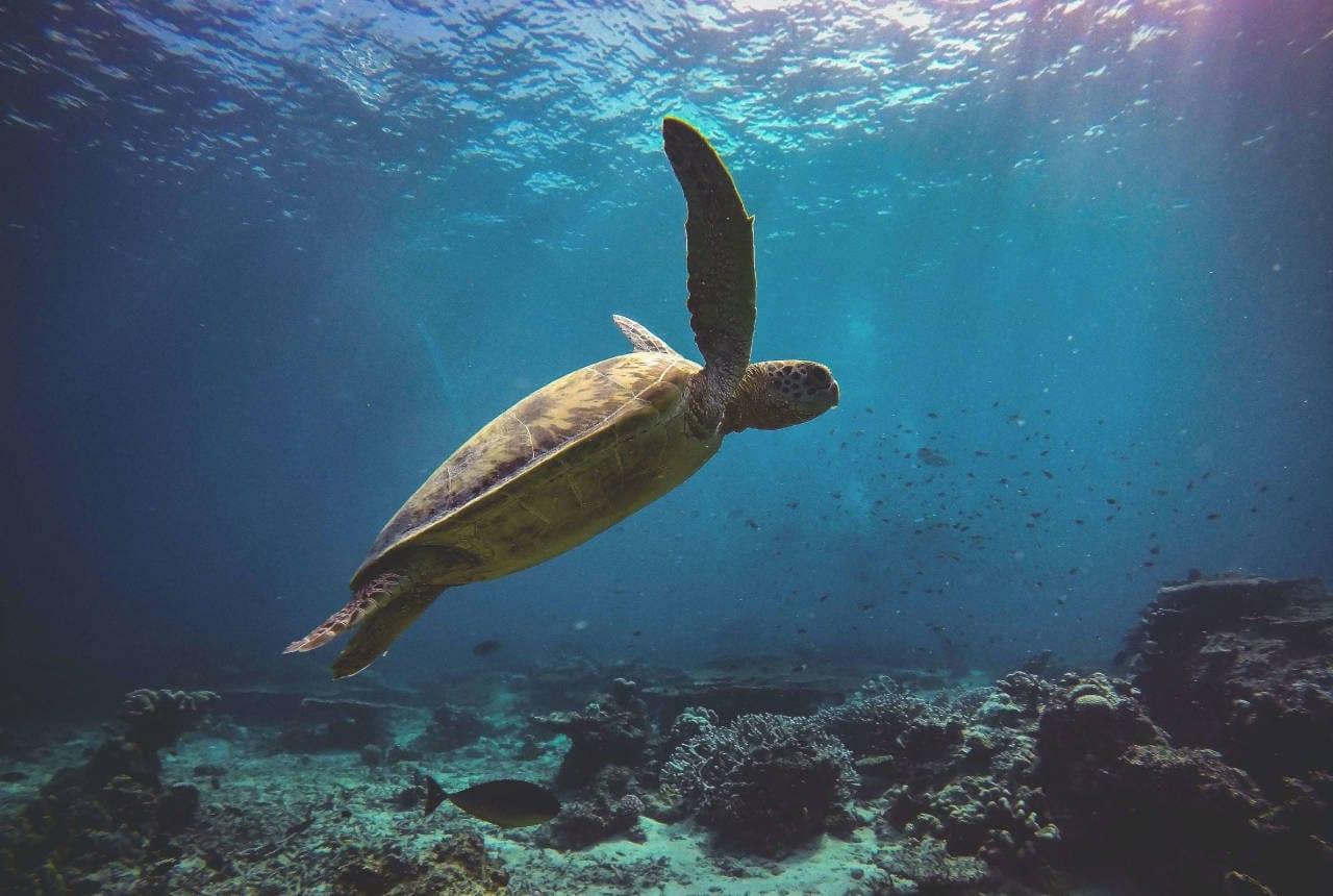 Sea turtle swimming through rays of sun