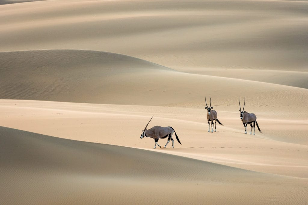 Safari in Serra Cafema, Namibia