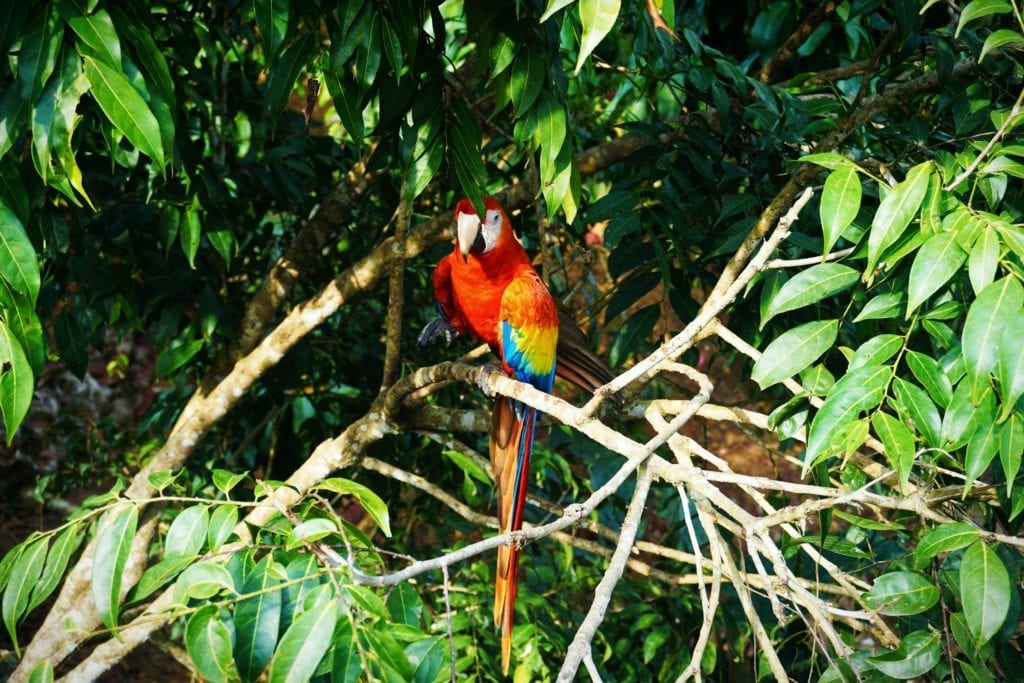 Colourful parrot as an example of Colombia's incredible wildlife