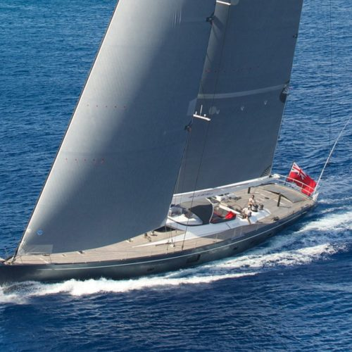 Silvertip sailing through clear blue waters