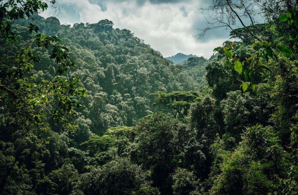 Waterfall trek amongst verdant jungle