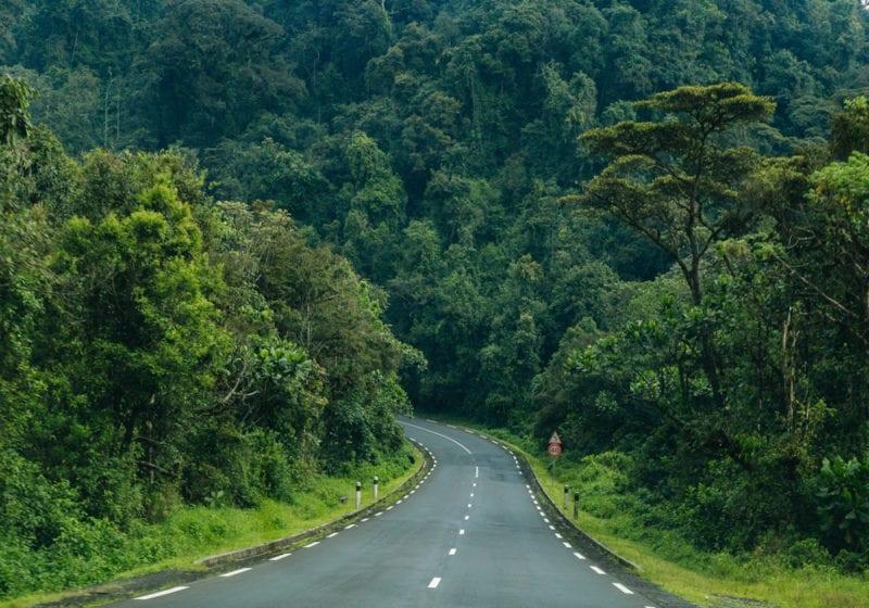 Rwanda Jungle Road