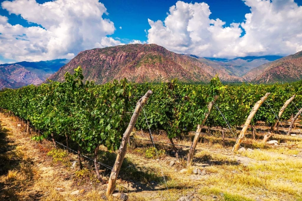 vineyards argentina winelands