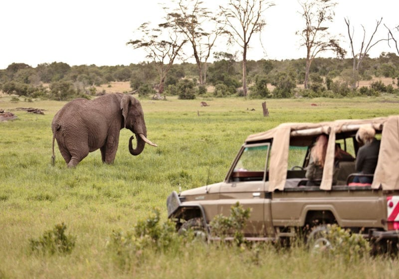 Elephant Game Drive Kenya
