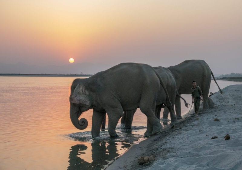 Sunset Elephants Nepal