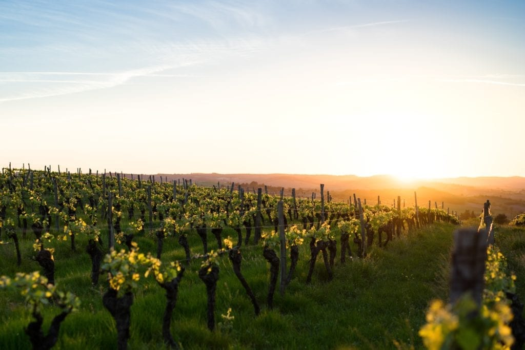 vineyards sunrise france
