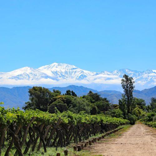andean mountains vineyards argentina