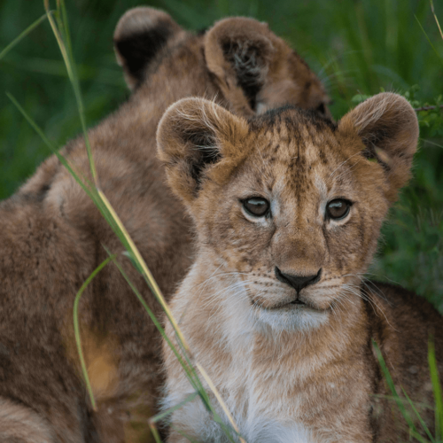 A Kenyan Adventure for all the Family