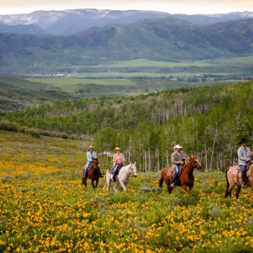 Horse riding through Montana's meadows