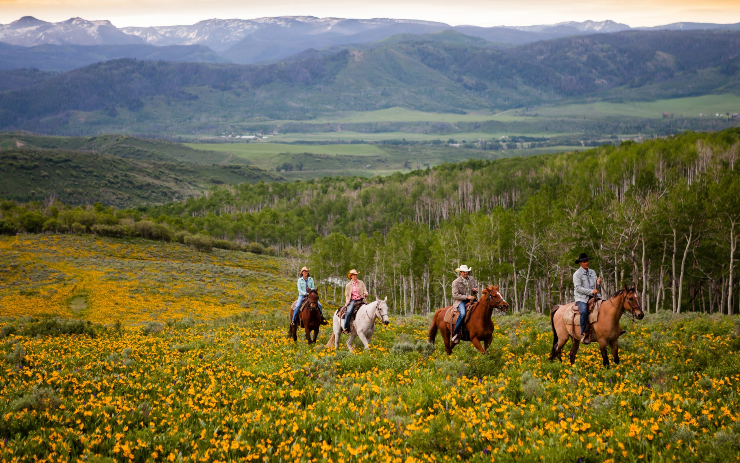 Horse riding through Montana's meadows