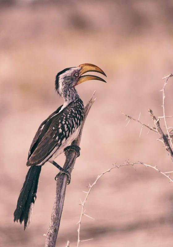 Namibia Bird