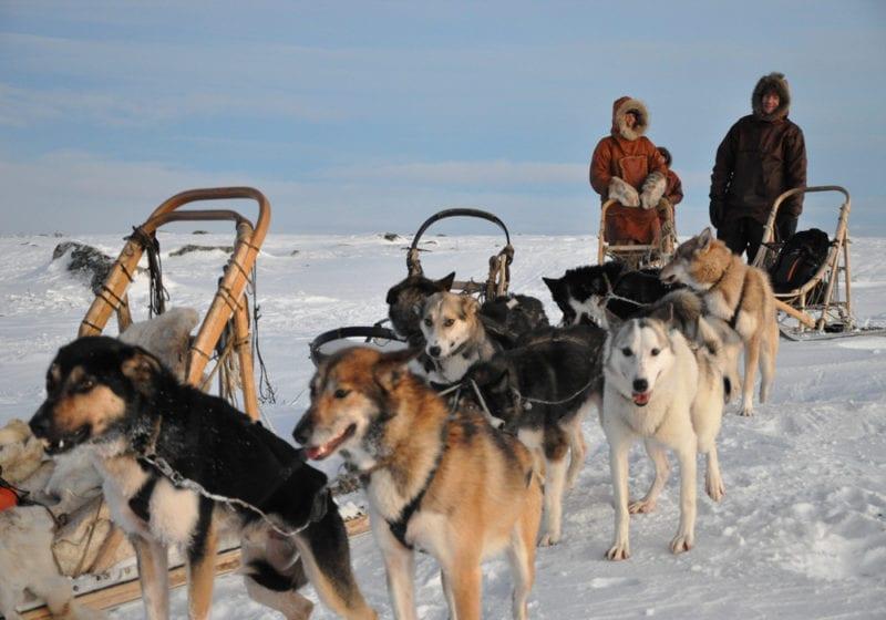 Norway Dog Sleds