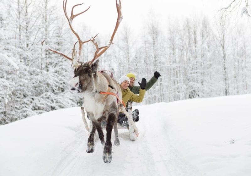 Reindeer sleigh ride in Finland