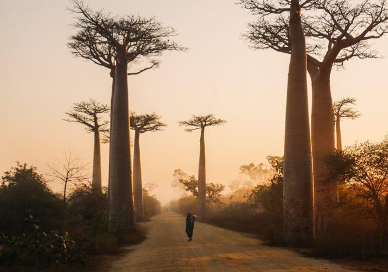 Road Madagascar Trees
