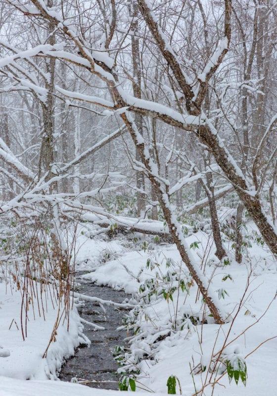 Snowy scenes in Japan