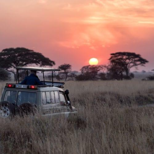 safari game drive sunset