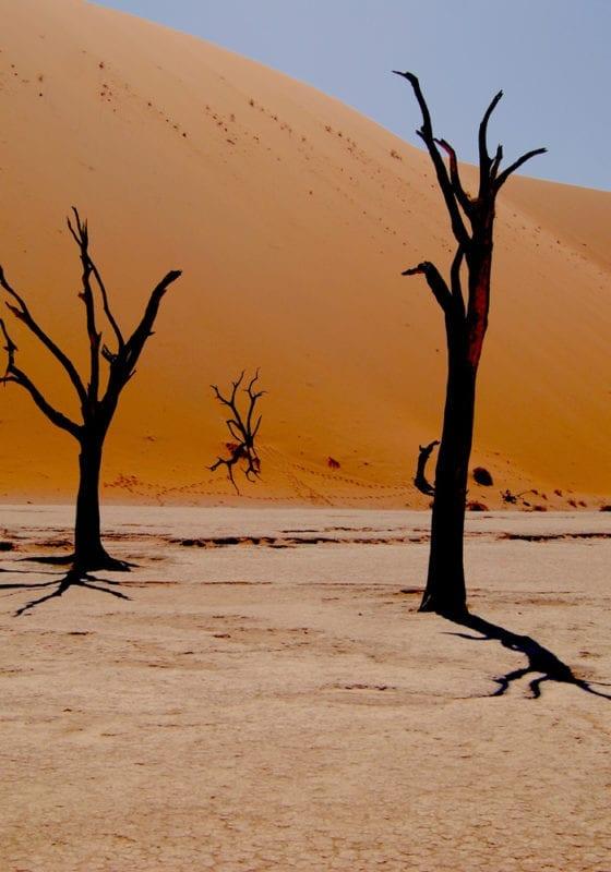 Trees in the Namib Desert