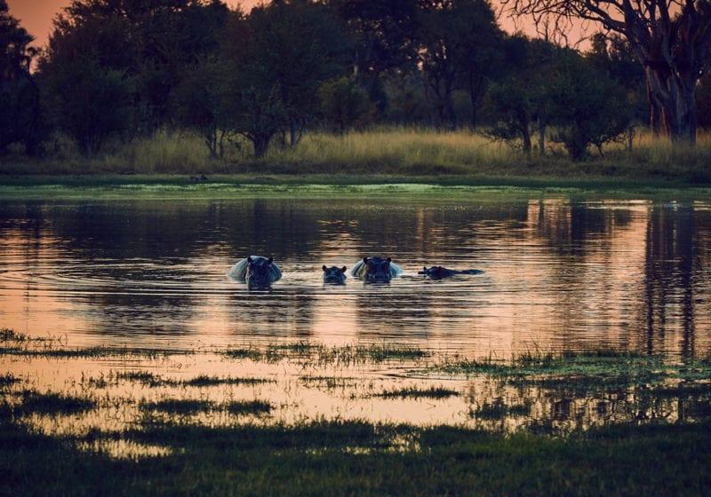 Zimbabwe Hippos Sunset