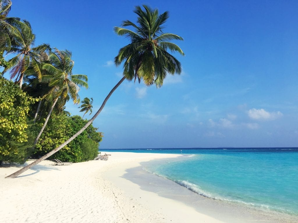 Beach with Palm Tree in the Maldives