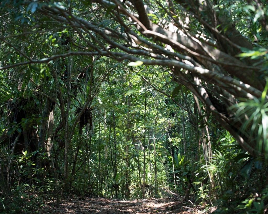 Nosy Mangabe Jungle