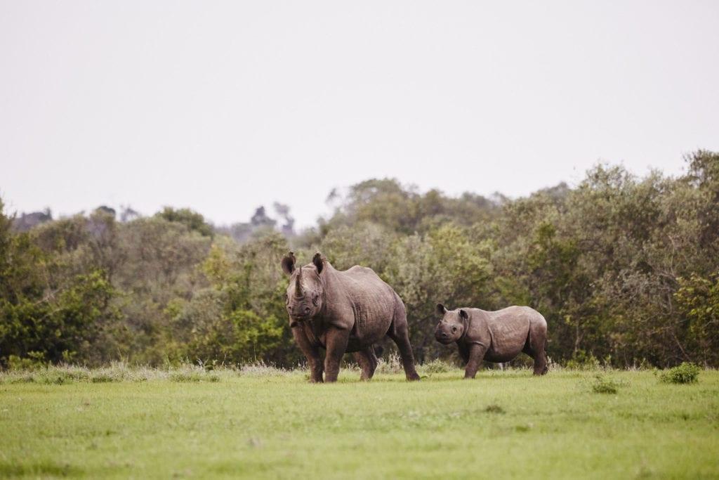 rhino calf borana kenya