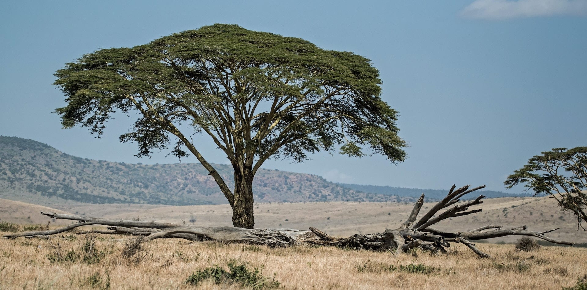 Hero Image Kenya Wilderness