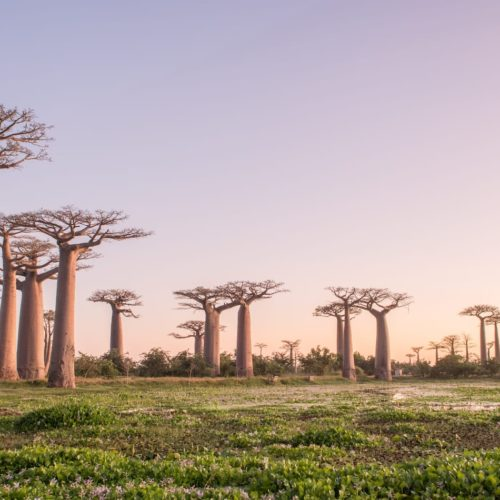 Hero Madagascar Baobabs t Sunset
