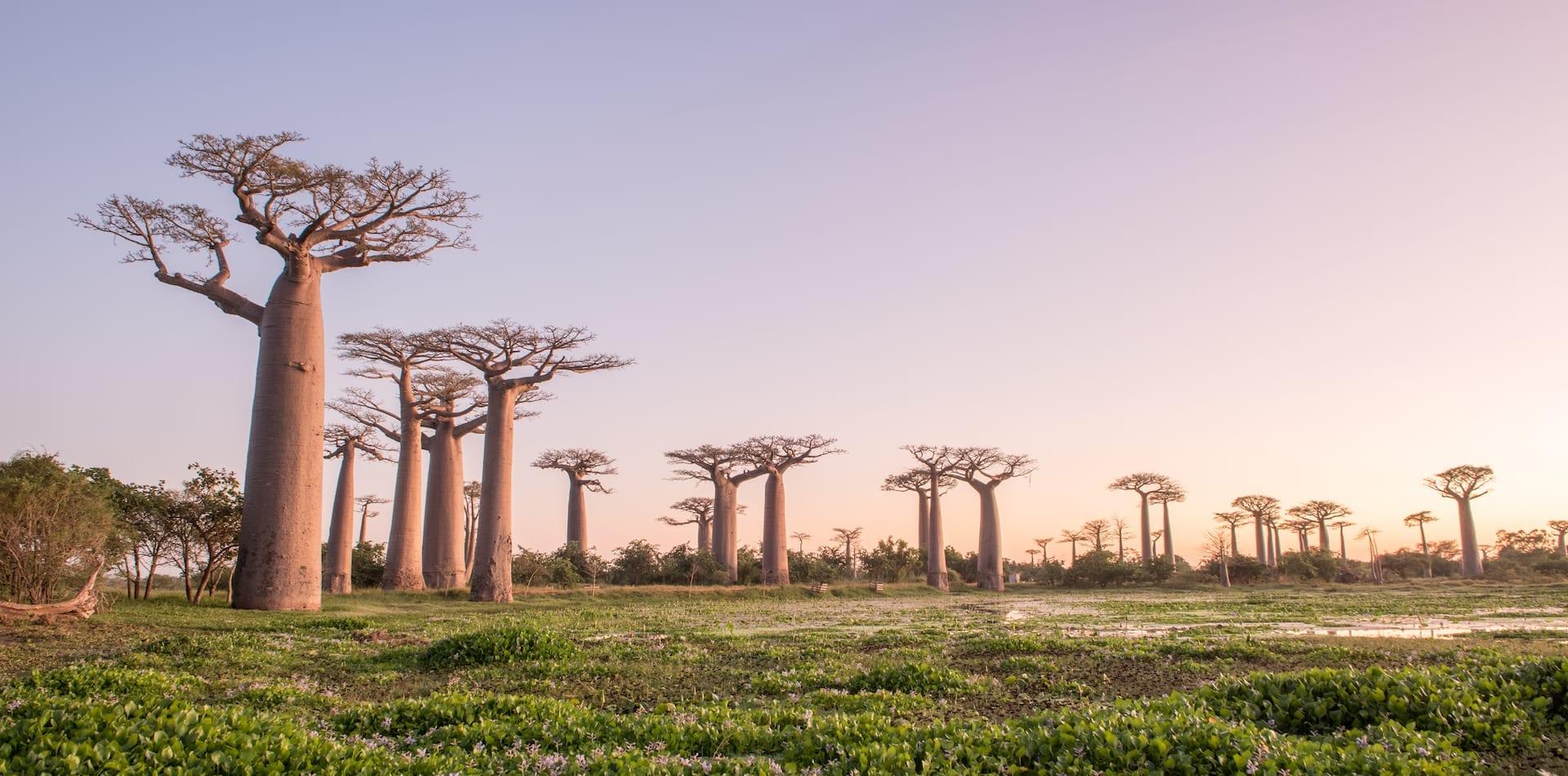 Hero Madagascar Baobabs t Sunset