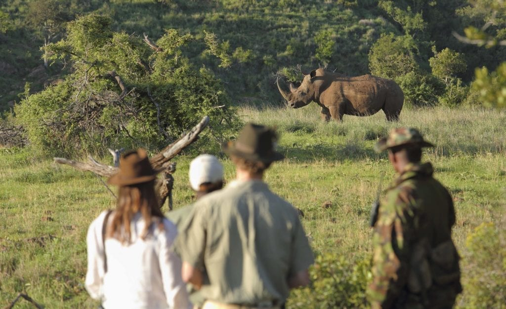 guests ranger rhino tracking experience
