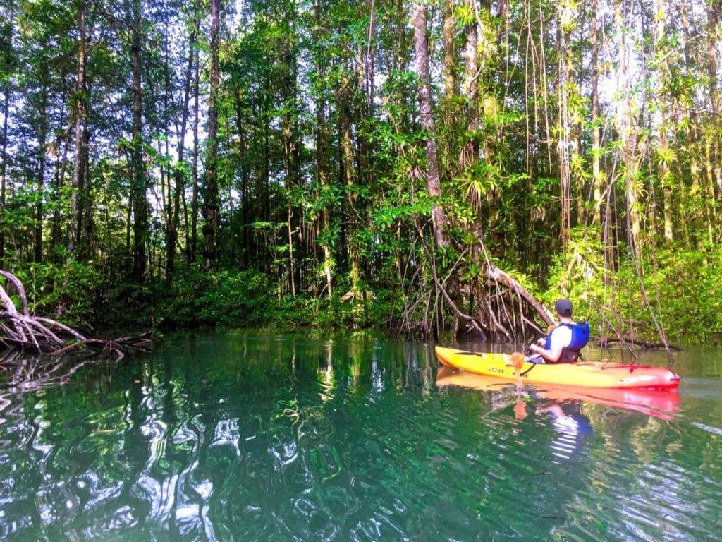 Kayaking through Mangroves in Costa Rica