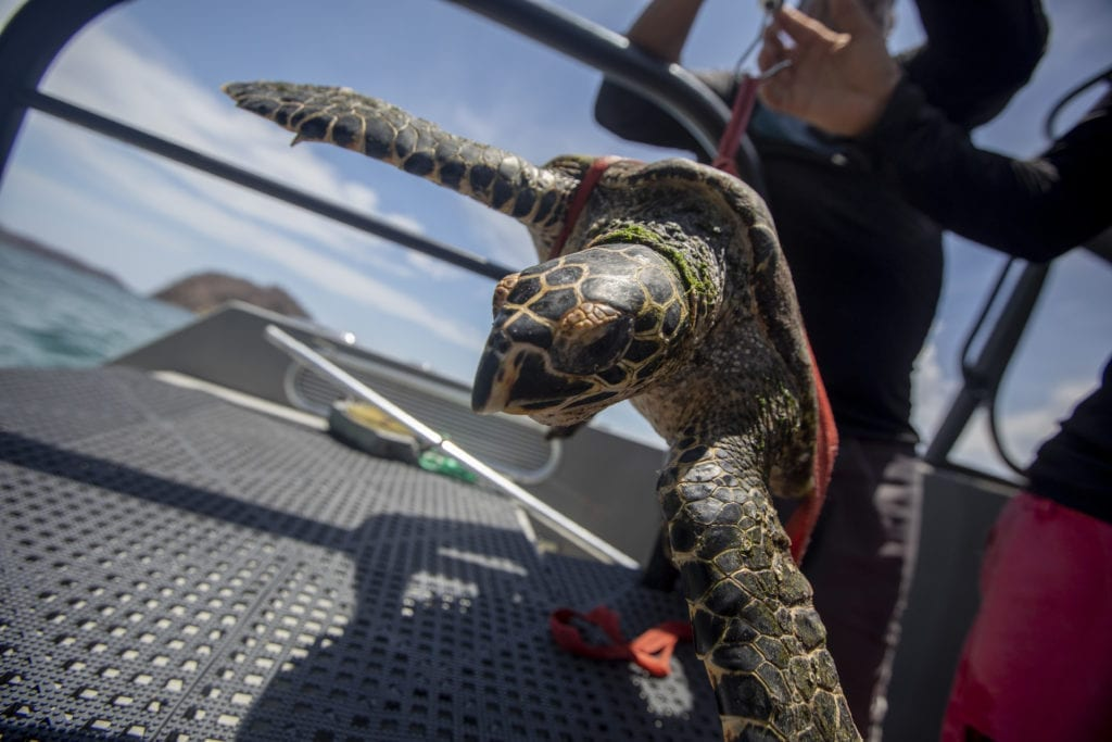 sea turtle conservation marine research