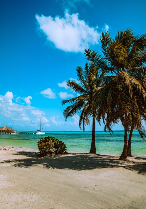 Ambergris Caye Beach Palm Trees Belize