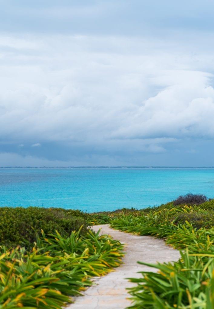 Beach Flora Ocean Quintana Roo Mexico