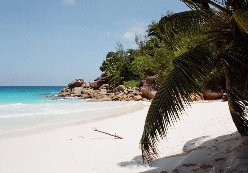 Beach in Seychelles Palm Tree and Granite Boulders
