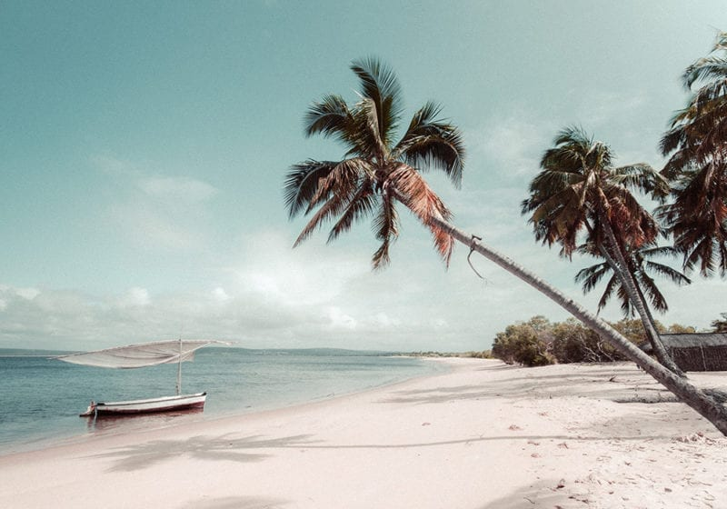 Mozambique Beach with Palm Trees and Boat