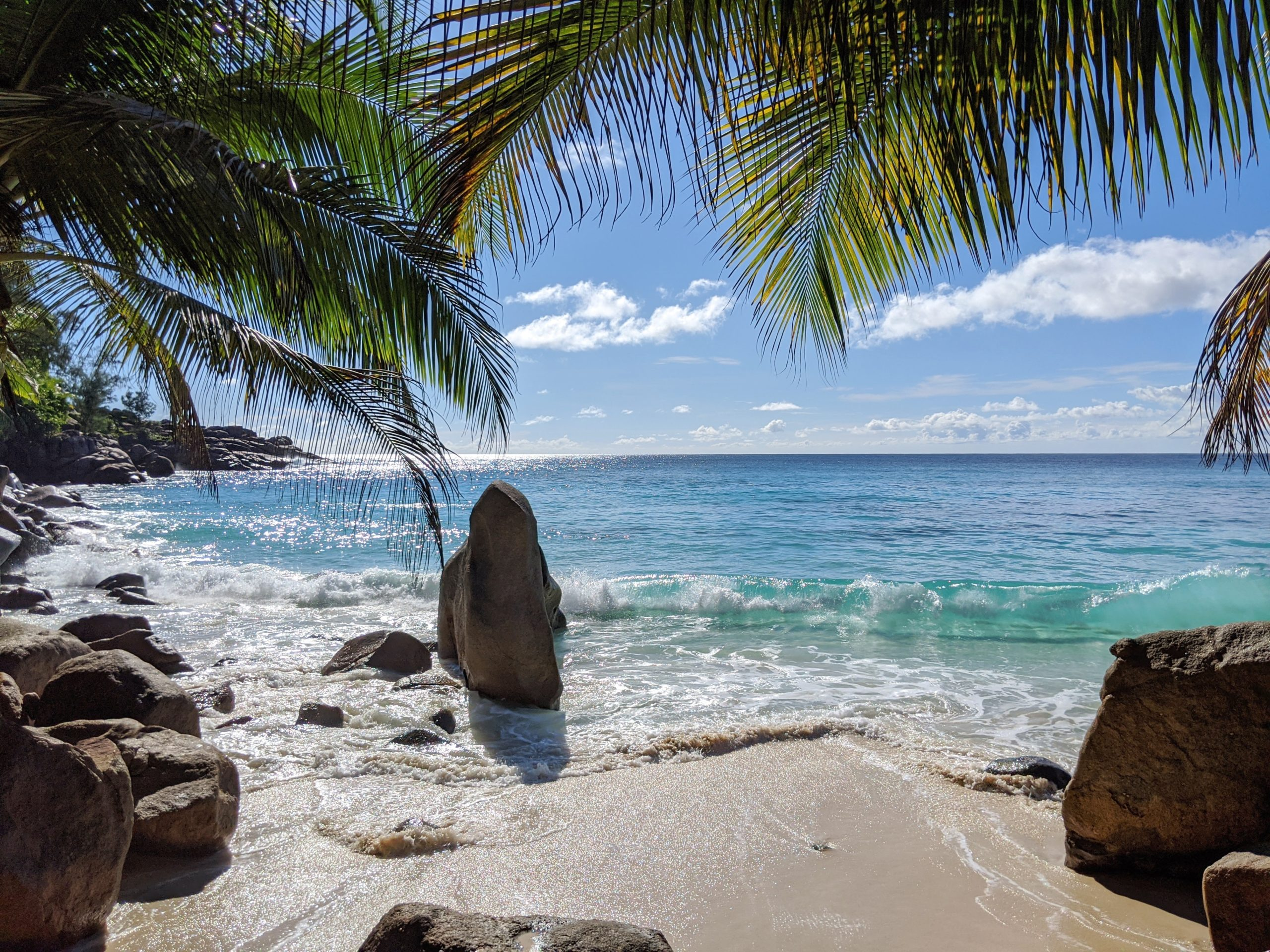 Palm Trees Beach and Oceans in the Seychelles