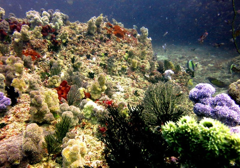 Diving in Mozambique the Bazaruto Archipelago