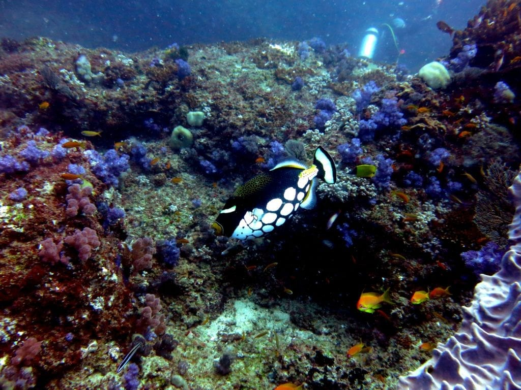 Reef Diving in a Sanctuary at Bazaruto Archipelago in Mozambique
