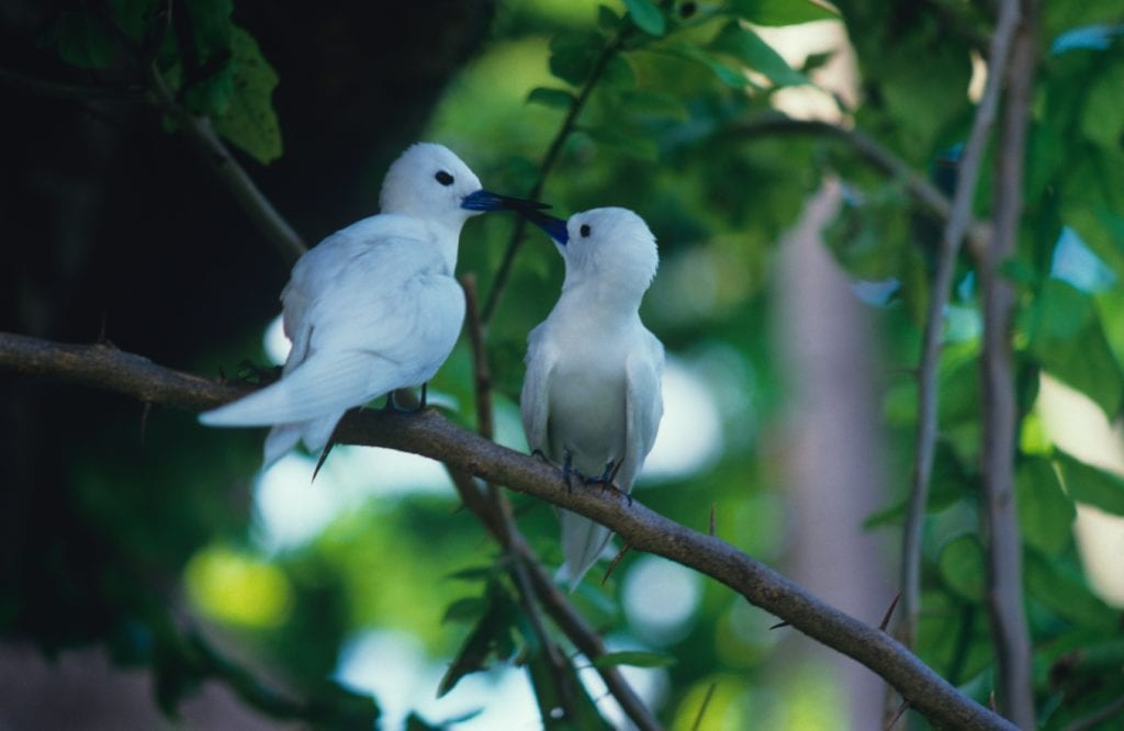 Residents of Bird Islands in the Seychelles