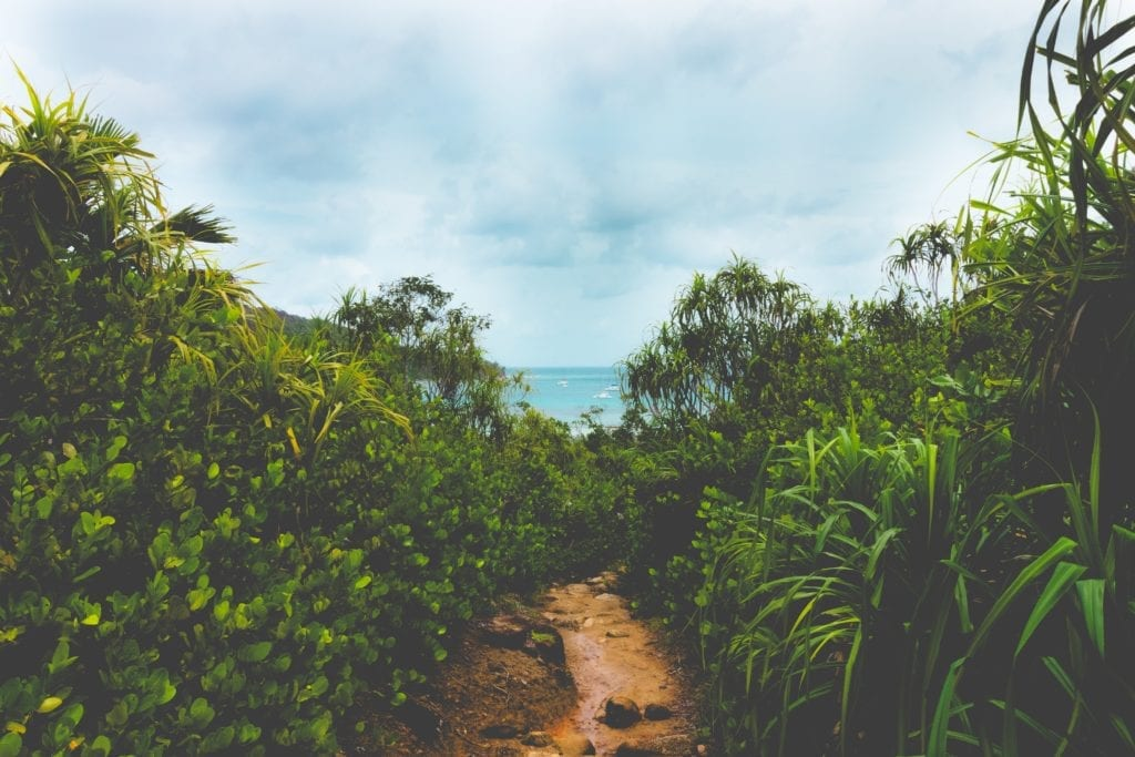 Seychelles Island Jungle Path to the Ocean