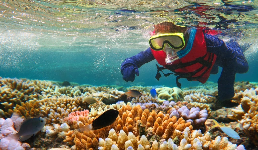Child snorkelling over the Great Barrier Reef in Australia on a family wildlife holiday