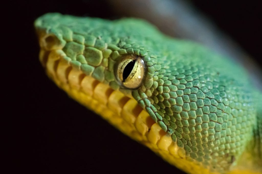 Close up of a Snake in the Peruvian Amazon