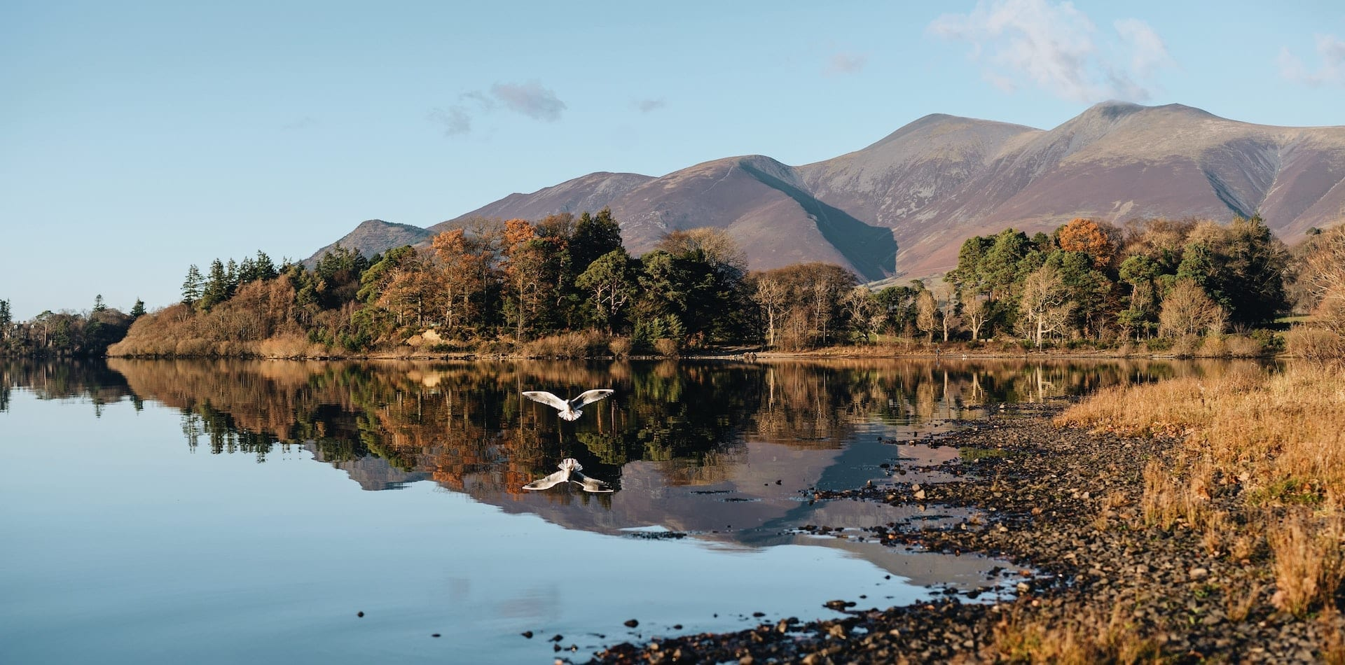 picturesque reflection of a bird swooning over a lake in the Lake District, Cumbria, UK