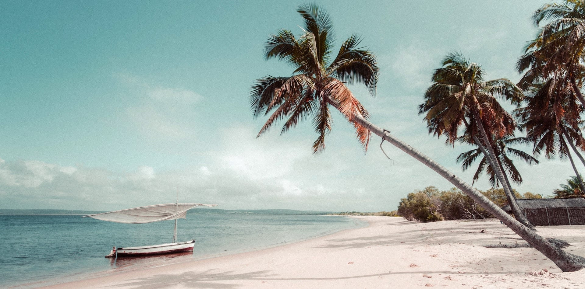 Palm Tree and Authentic Boat on a Beach in Mozambique, Indian Ocean, Africa