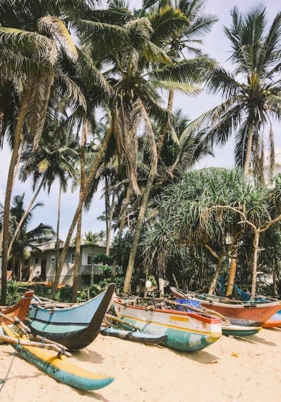 Mirissi Native Boats under the Palm trees in Sri Lanka
