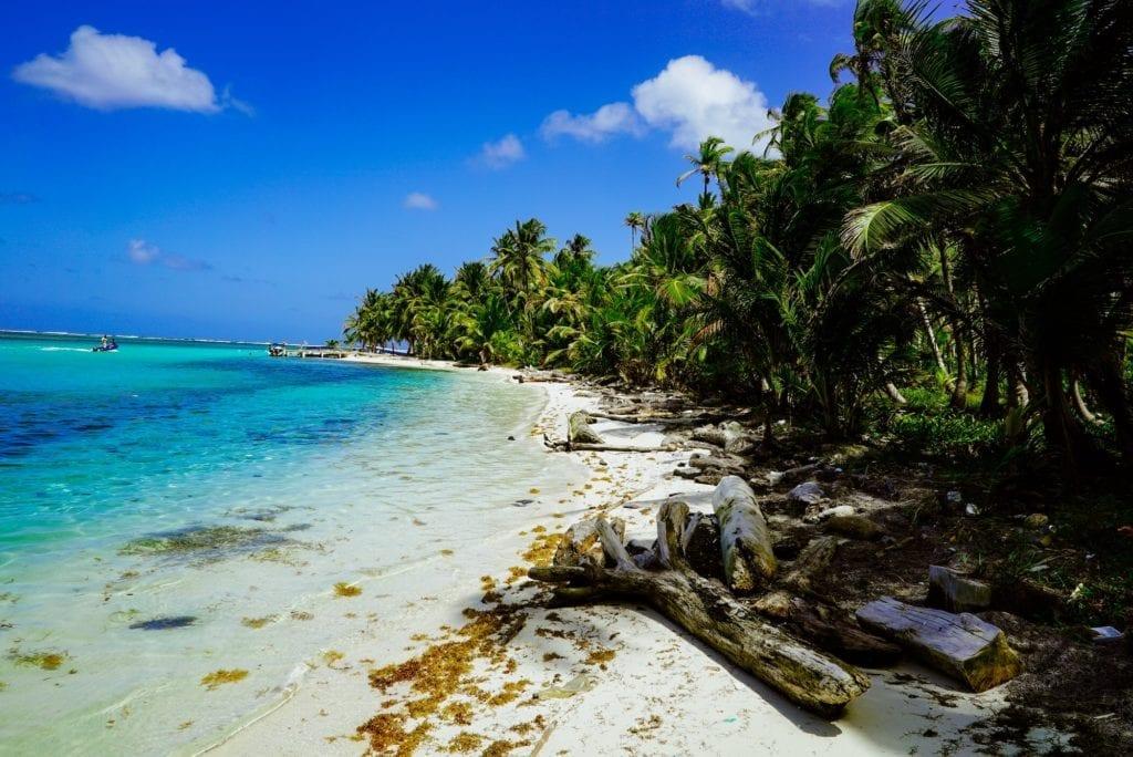 Panama Beach Palm Trees and Sand