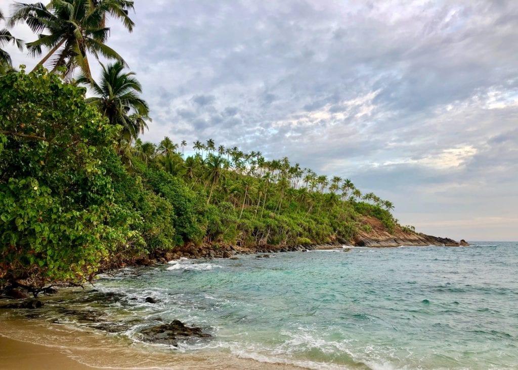Sri Lanka Coastline Palm Trees